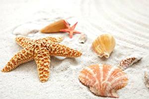 Фотография Морские звезды Ракушки Песок