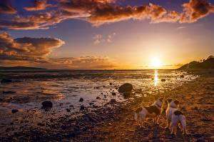 Фото Рассветы и закаты Небо Пейзаж Берег Собаки Камни Облака
