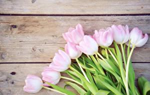 Картинки Тюльпаны Крупным планом Доски