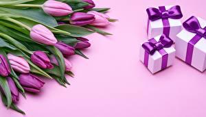 Фотографии Тюльпаны Подарки Коробки Фиолетовый цветок