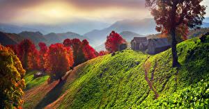 Фотографии Украина Здания Осенние Пейзаж Закарпатье Холмы Деревья