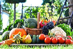 Фотография Овощи Фрукты Виноград Груши Тыква Томаты Корзина Еда