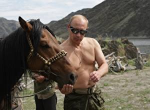 Фотография Владимир Путин Лошади Мужчины Очки Знаменитости