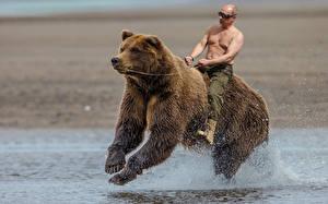 Фотография Владимир Путин Медведи Мужчины Гризли Бег Юмор