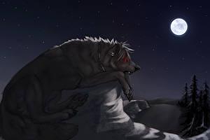 Картинка Волки Волшебные животные Ночь Луна