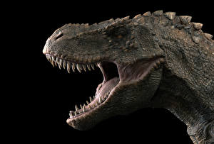 Картинка Древние животные Динозавры Тираннозавр рекс Злость Зубы Черный фон Голова Животные