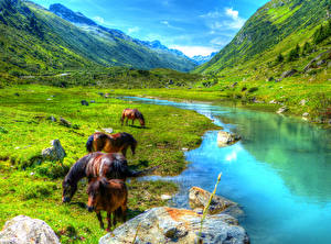 Обои Австрия Горы Луга Лошади Пруд Пейзаж Paznauntal Природа Животные