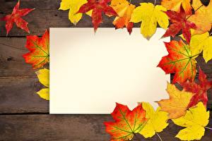Фотография Осень Листва Шаблон поздравительной открытки Природа