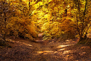 Картинки Осенние Леса Тропа Листва