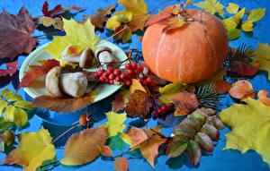 Картинка Осенние Грибы Тыква Рябина Листья Природа