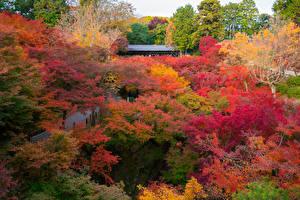 Обои Осень Парки Деревья Разноцветные Природа