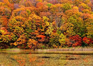 Обои Осенние Сезон года Деревья Разноцветные Природа