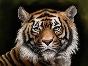 Фотография Большие кошки Тигры Рисованные Голова Усы Вибриссы Смотрят животное