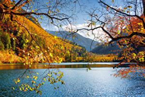Фото Китай Цзючжайгоу парк Парки Озеро Осенние Пейзаж Ветки Природа