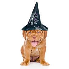 Обои Собаки Хеллоуин Белый фон Бордоский дог Шляпа Язык (анатомия) Животные