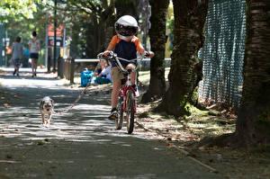 Фото Собаки Чудо 2017 Велосипед Мальчики Шлем Jacob Tremblay