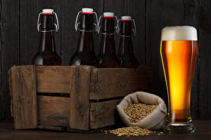 Картинка Напиток Пиво Стакана Бутылки Зерно Еда