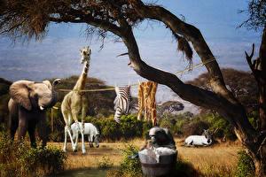 Обои Слоны Жирафы Оригинальные Laundry Day In Africa Смешные