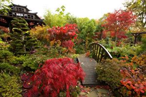 Обои Англия Осень Сады Мост Кусты Walsall Garden Природа