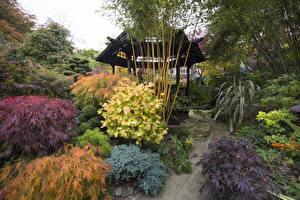 Фотография Англия Сады Осень Пагоды Кустов Walsall Garden Природа