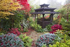 Фото Англия Сады Пагоды Осенние Кусты Walsall Garden Природа