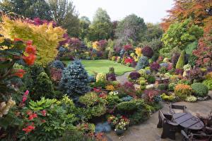 Картинки Англия Сады Кусты Ель Walsall Garden