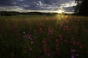 Обои Финляндия Рассветы и закаты Поля Трава Природа