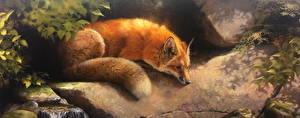 Фото Лисы Рисованные Хвост Животные