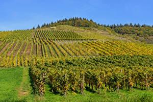 Фотографии Германия Поля Осенние Виноградник Кусты Moselle