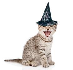 Картинка Праздники Хеллоуин Коты Белый фон Шляпа Котята