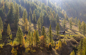 Фото Италия Сезон года Осень Деревья Ель Le Piane Piedmont Природа