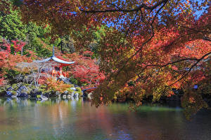 Обои Япония Киото Парки Пруд Ветвь