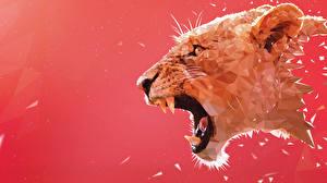 Фотографии Львы Большие кошки Клыки Рисованные Злость Голова Животные