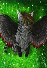 Фотография Волшебные животные Кошки Крылья
