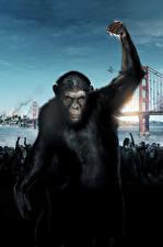 Картинка Обезьяны Восстание планеты обезьян Хмурость кино