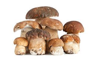 Фотография Грибы Белый гриб Белый фон Еда