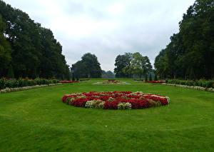 Картинка Нидерланды Сады Бегония Газон Деревья Кусты Garden De Haar Castle