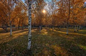 Фотографии Парк Осень Береза Листва Лучи света Деревья