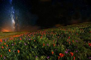 Фотографии Мак Небо Звезды Поля Ночь