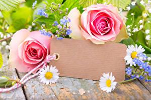 Фото Розы Ромашки Розовый Шаблон поздравительной открытки Цветы