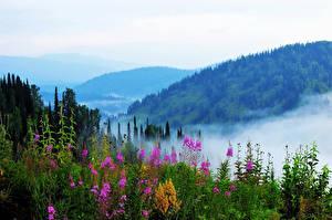 Обои Россия Сибирь Холмы Туман Кусты Alatau