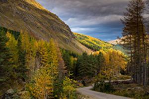 Картинки Шотландия Парки Осень Дороги Гора Лес Cairngorms National Park Природа