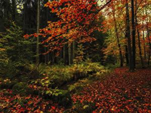 Фотографии Сезон года Осенние Леса Листва Мох Природа