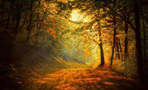 Фотографии Времена года Осенние Леса Тропа Деревья Природа