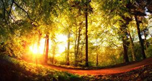 Картинка Сезон года Осенние Леса Деревья Лучи света