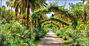 Фото Испания Парки Канары Кусты Аллея Дизайн Пальмы Parque García Sanabria Tenerife Природа