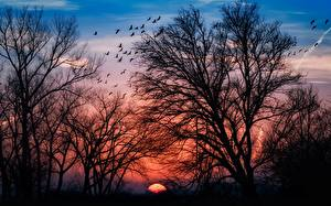 Картинки Рассветы и закаты Деревья Ветвь Силуэт Природа