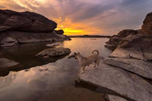 Фото Таиланд Берег Камни Рассветы и закаты Собаки Ubonratchathani