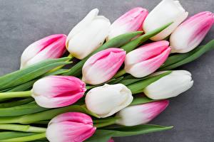 Фотографии Тюльпаны Крупным планом