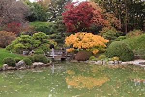 Фотография США Осенние Парки Пруд Кусты Деревья Brooklyn Botanic Garden